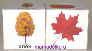 Картинки осенних деревьев для детей с названиями