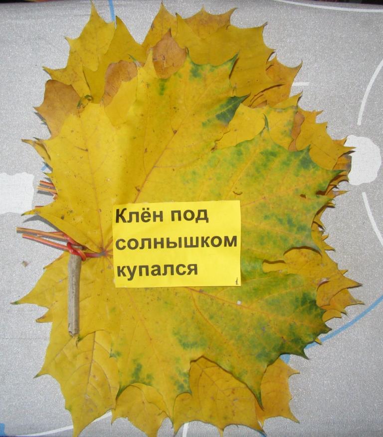 Картинки больших осенних листьев