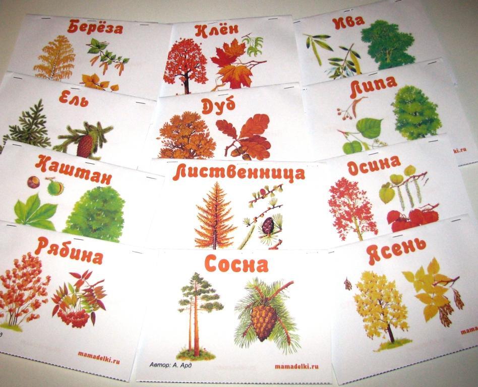 Книжка малышка деревья