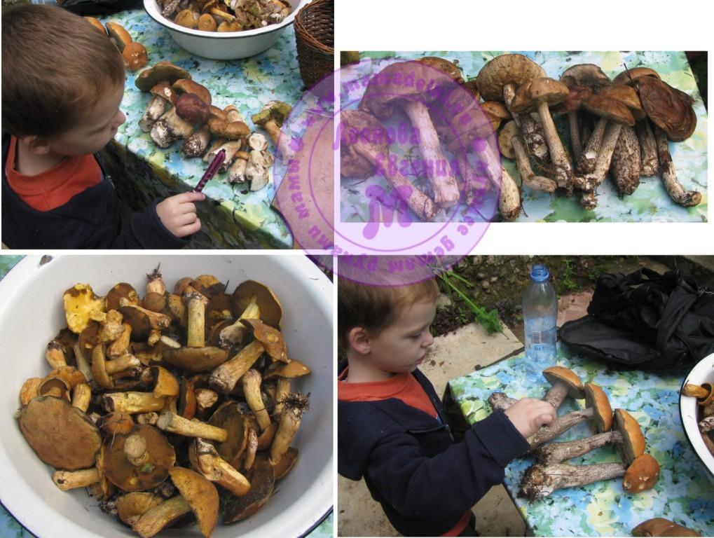 МП 26 грибы 1