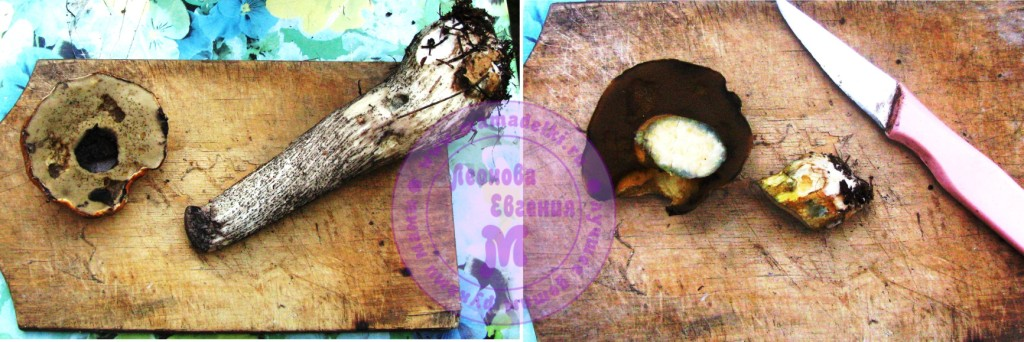 МП 26 грибы 2