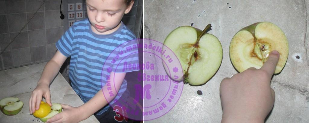МП 27 яблоки 3