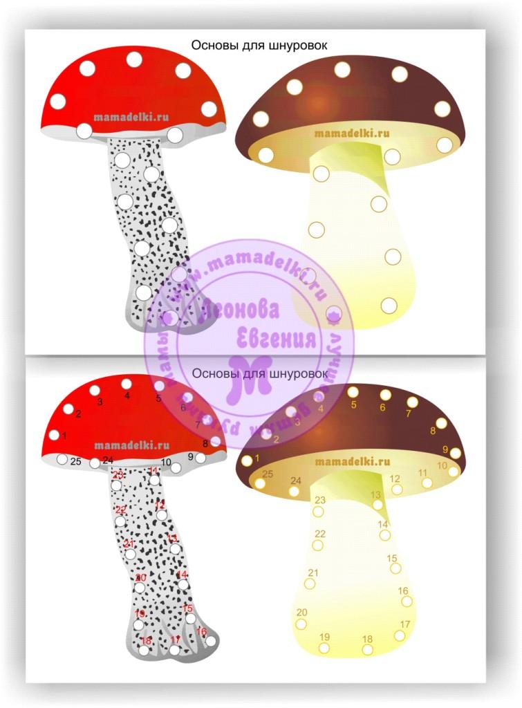 основы шнуровок грибы