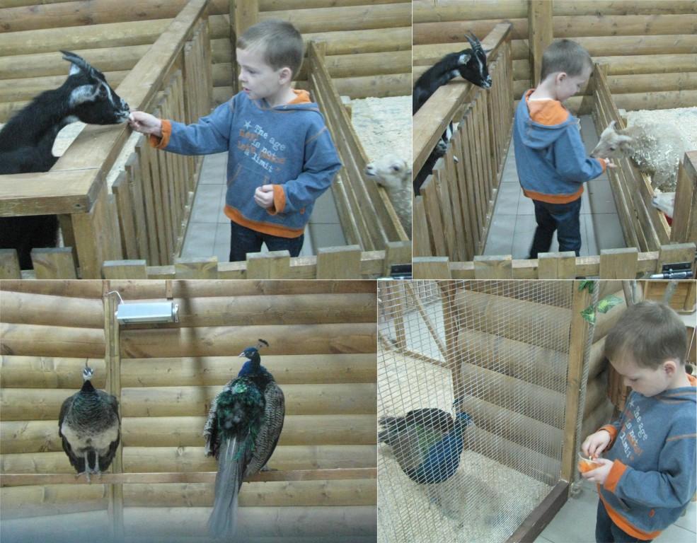 trogatelnyy-zoopark-2