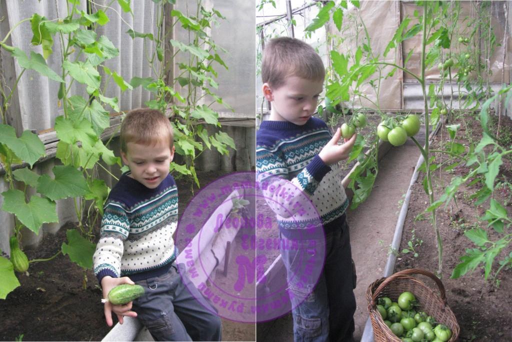 mp-28-ogurcy-i-pomidory 1